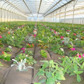 Biobased geotextile for growbags