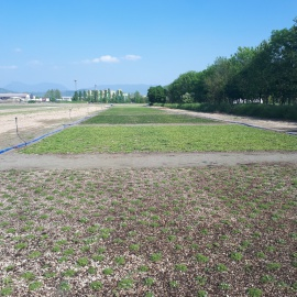 Biobased support mats for precultivated flower mats