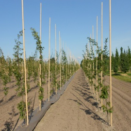 Biobased weed control mat for tree nursery