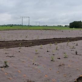 Biobasierte Unkrautmatte für Landschaftsbau