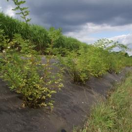 Biobasierte Unkrautmatte für Rosengang