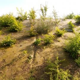 Biocovers- natürliches Aussehen - aspect naturel dû au mélange de fibres biologiques et de fibres naturelles