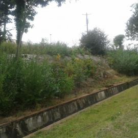 Biocovers - Bodendecker übernehmen nach 2 à 5 Jahren den natürlichen Erosionsschutz, nachdem zerfällt die Mulchmatte