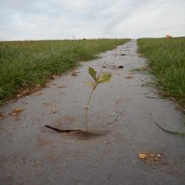 Biocovers - toile anti-mauvaises herbes - paillage PLA