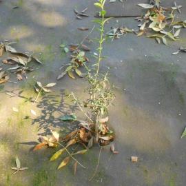 Biocovers aspect after 1à2 years - apsect naturelle après 1à2 saisons