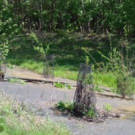 Biocovers Bioweedstop for landscaping - biologische Unkrautkontrole im Galabau