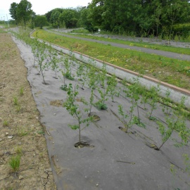 Biocovers Bioweedstop with long life time  useful for anti erosion applications