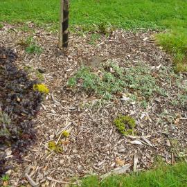 Biocovers Bioweedstop with tiny layer of bark