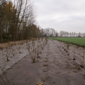 BIOCOVERS® for sustainable landscaping