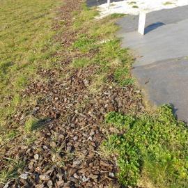 Biocovers mit Much-with bark und nach 2 Monaten mit Unkraut-after 2 months with weeds (LIfe+)