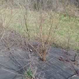 Biocovers paillage anti mauvais herbe100% issu de matériaux renouvelables
