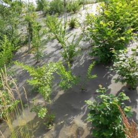 Biocovers paillage biobasé pour de beaux aménagements paysagers écoconçus.- projet Vinci