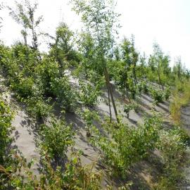 Biocovers paillage biobasée pour de beaux aménagements paysagers écoconçus.- projet Vinci
