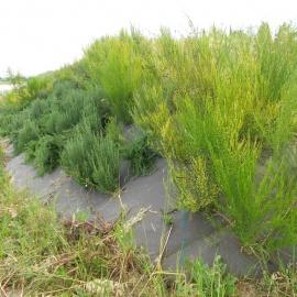 Biocovers paillage biodegradable 100% issu de matières végétales renouvelables