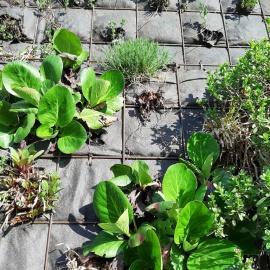 Biomats for green walls, living walls