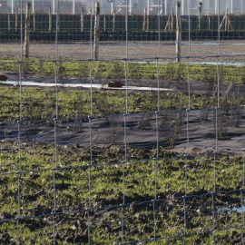 Bioweedstop weed control mat installed in very wet conditions - installations dans des conditions très humides
