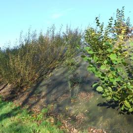 dauerhaften Biocovers Mulchmatten statt Kokosgewebe für späteren Bepflanzung