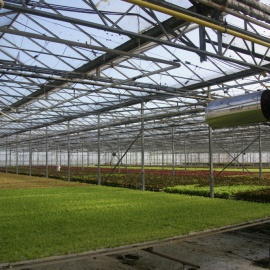 Biobased and biodegradable PLA support for the hydroponic cultivation of microgreens, herbs and micro leaf salad