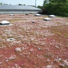 Ecogrow - Biofilz fürs Gründach