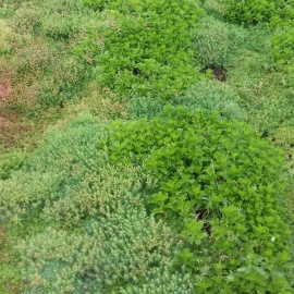 Ecogrow, fully biobased, light and easy to cut, allows quick rooting of sedums