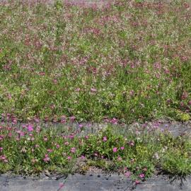 Ecogrow Kräuterrollmatte flower mats