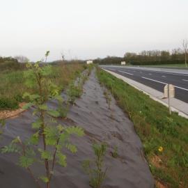 Mulchmatte BIOCOVERS® für Böschungen im Strassenbau
