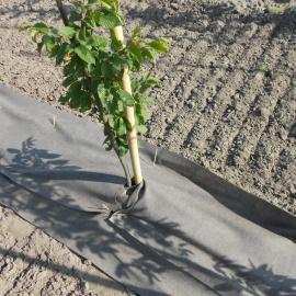 Organisch onkruiddoek voor boomkwekerij