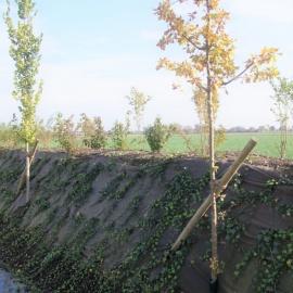 PLA Mulchmatte für Erosionschutz