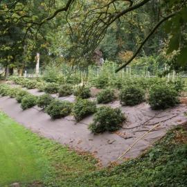 PLA Mulchmatte für Landschaftsbau und Parken