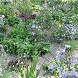 Unkrautmatte für ökologsichen Gartenbau