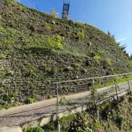 vertikaler Begrünung Grüne Wände Mooswand