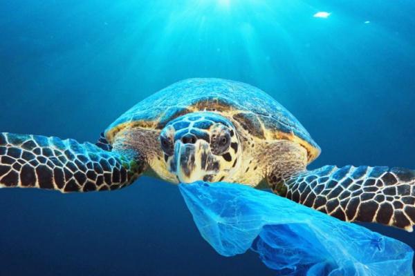 Restrictive legislation on the use of oil based plastics